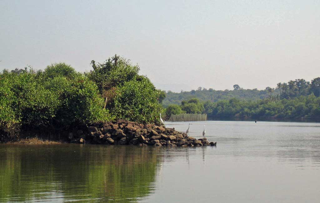 Birdwatching-backwater-boat-Trip-goa