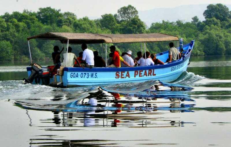 Crocodile-and-Birdwatching-Boat-Goa-Trip
