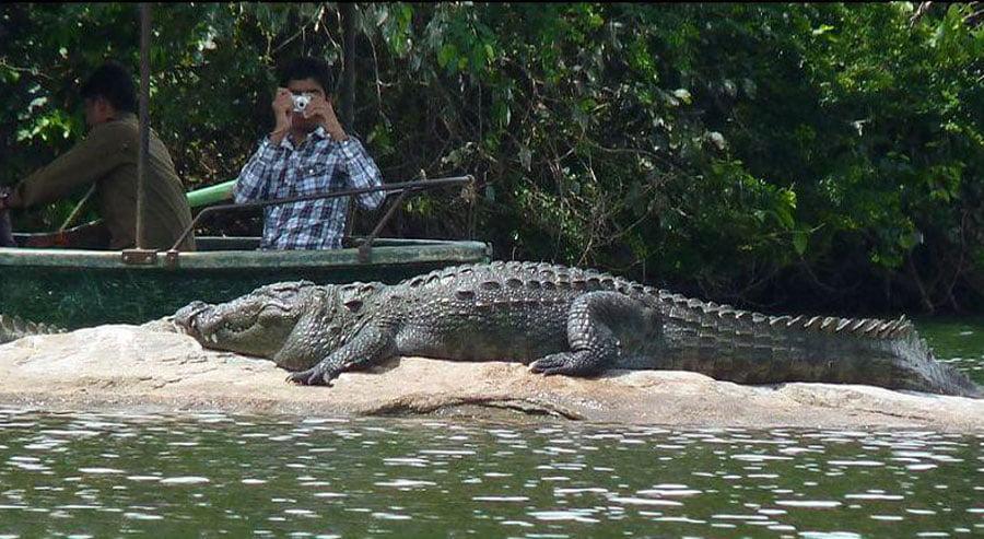 Crocodile-safari-in-goa