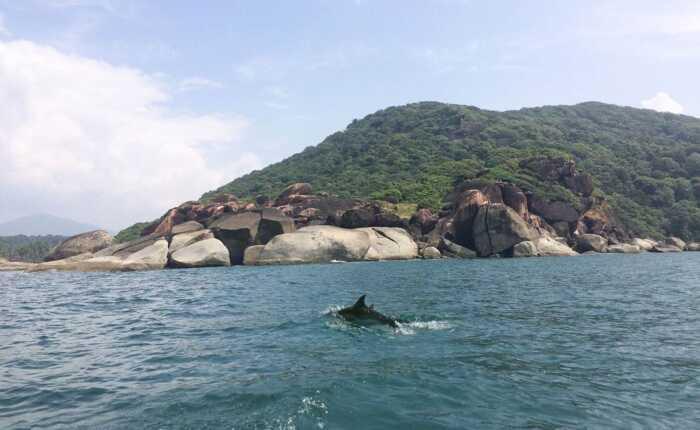 Dolphin Safari Boat Trip Goa