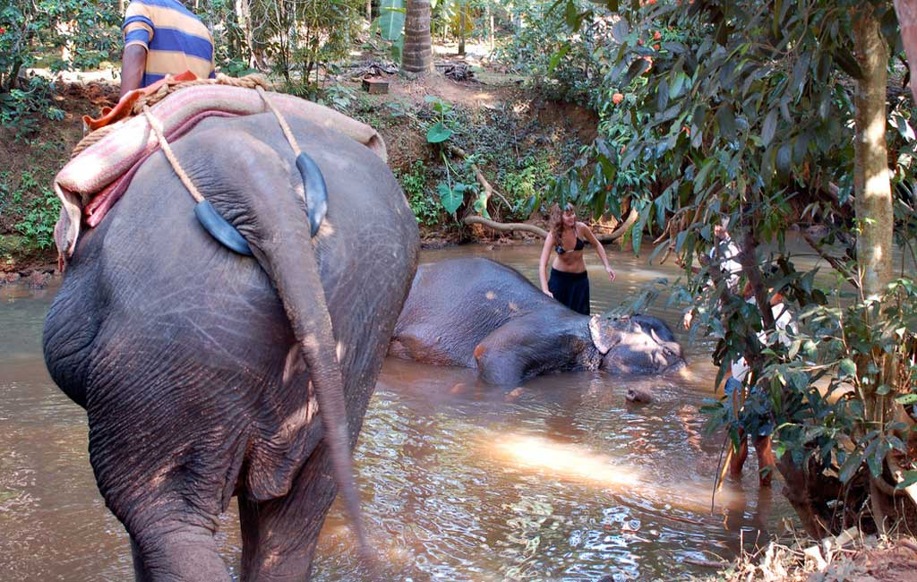 Elephant Shower at Spice Plantation