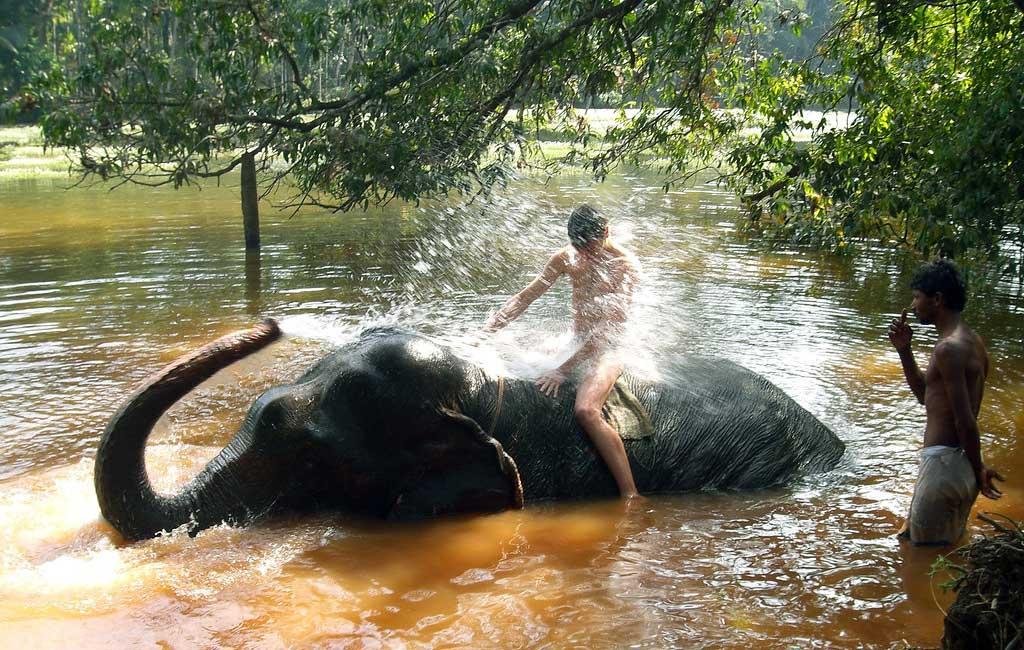 Dudhsagar-water-falls-elephant-shower