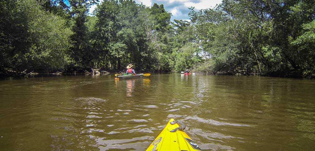 Mangrove Kayaking backwater in Goa