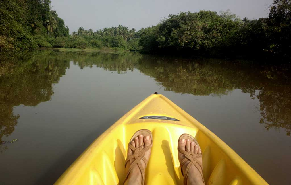 Mangrove Kayaking backwater tour in Goa