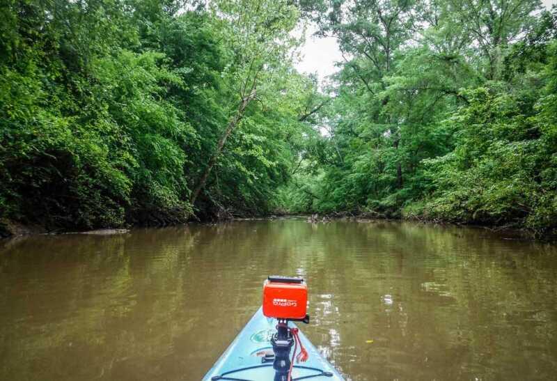 Mangrove Kayaking backwater trip Goa