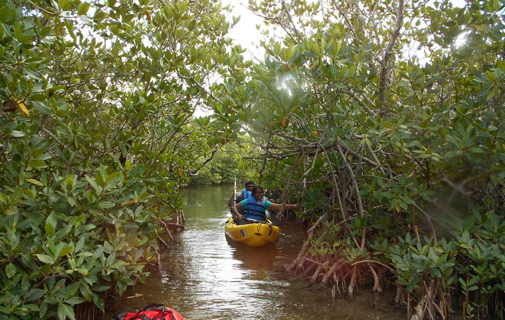 Mangrove Kayaking trip in Goa