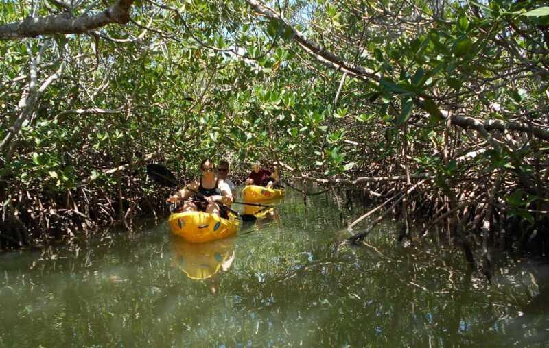 Mangrove Kayaking trip in Goa