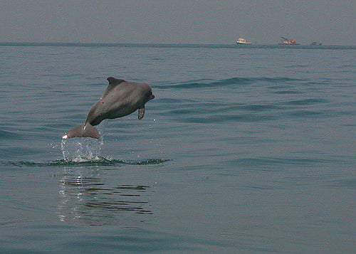 dolphin spotting Safari Goa