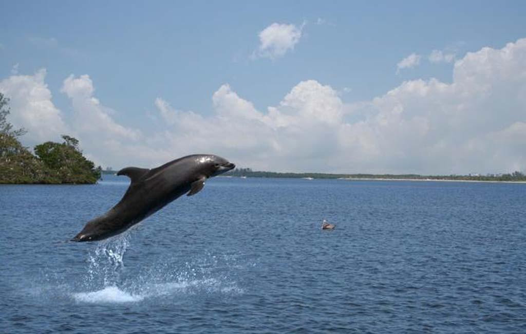 dolphin-spotting-trip-goa