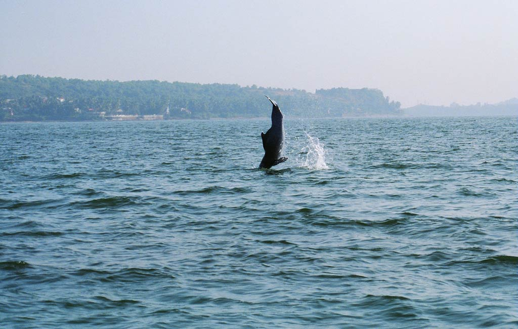 dolphin watching Boat Cruise