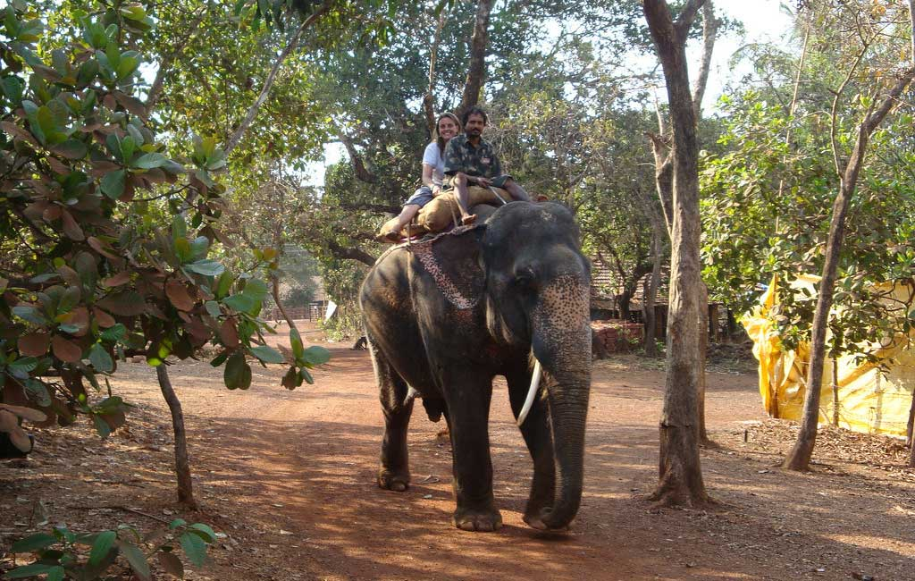 elephant safari at dudhsagar falls