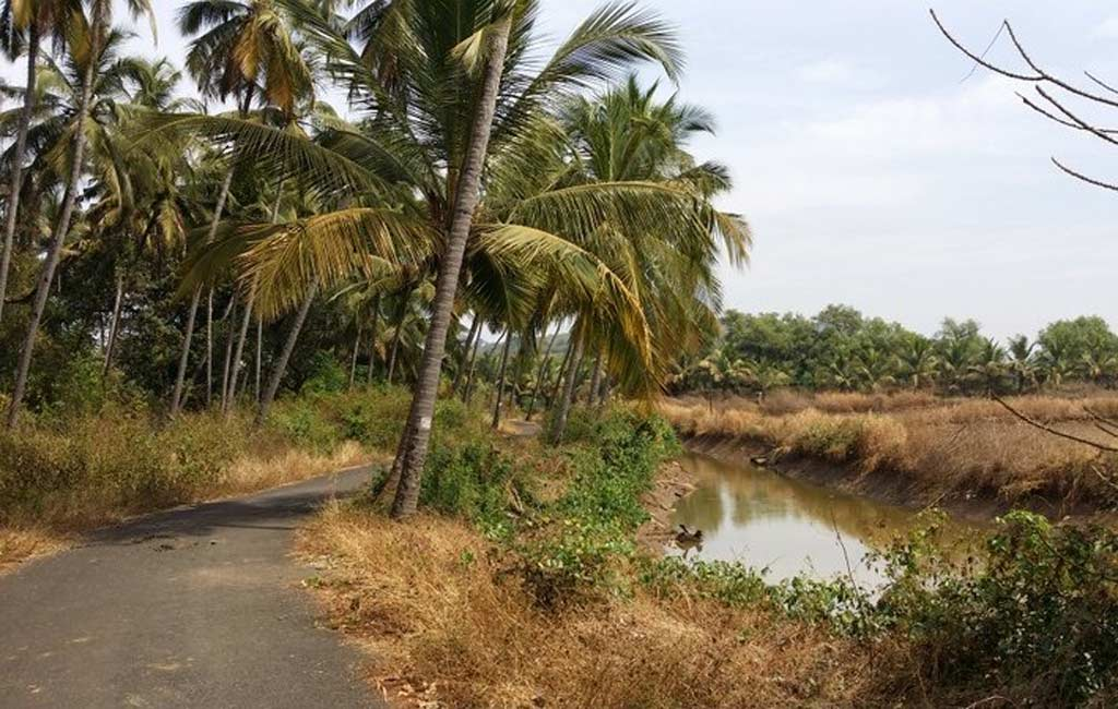 bicycle tour goa