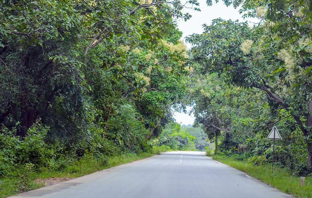 Road to the dudhsagar falls