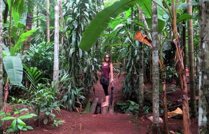 Spice Plantation Tour Goa