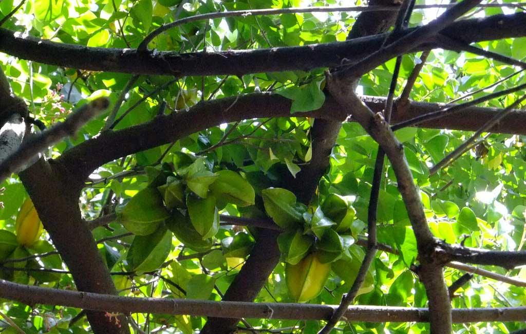 Spice Plantation Tour Goa