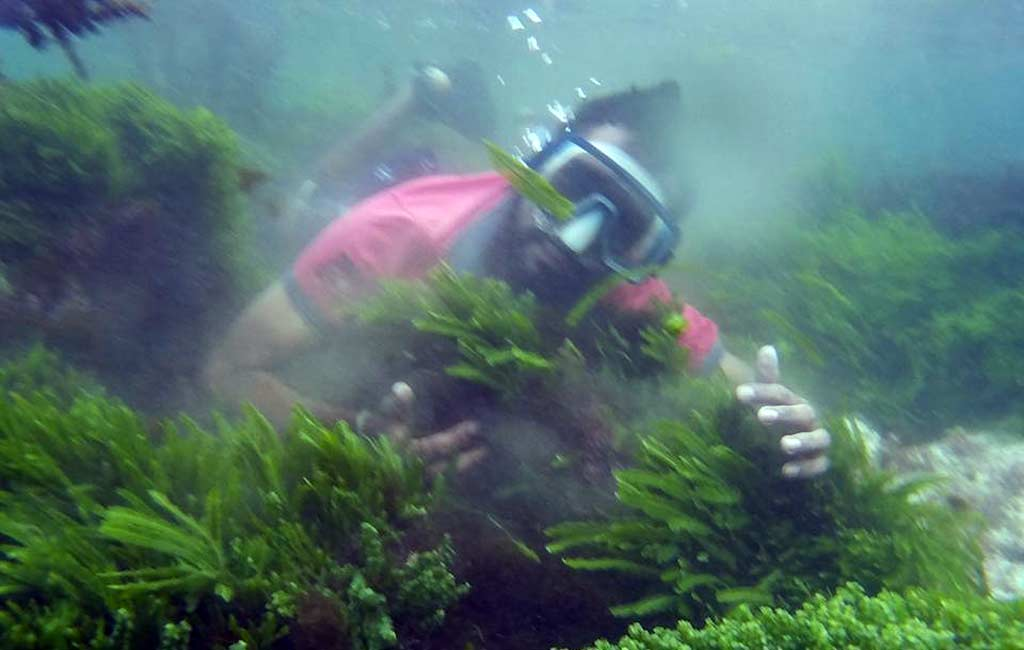scuba-diving-at-malvan