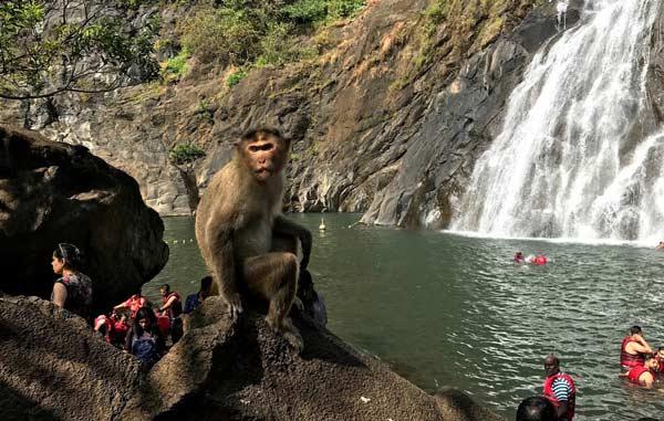 Dudhsagar-falls-trip-goa