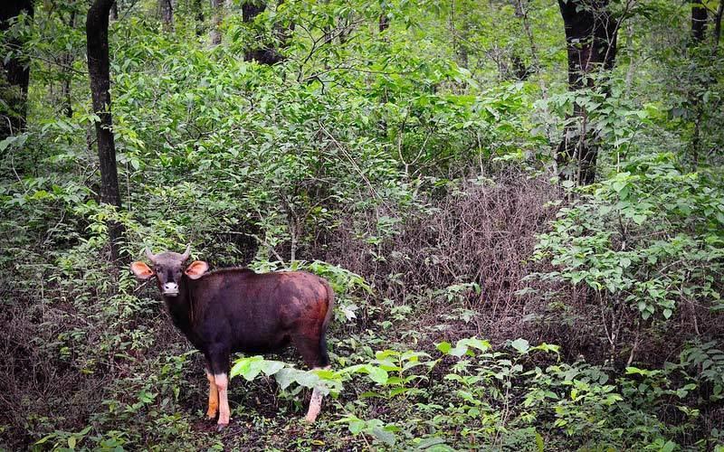 Mhadei-Wildlife-Sanctuary