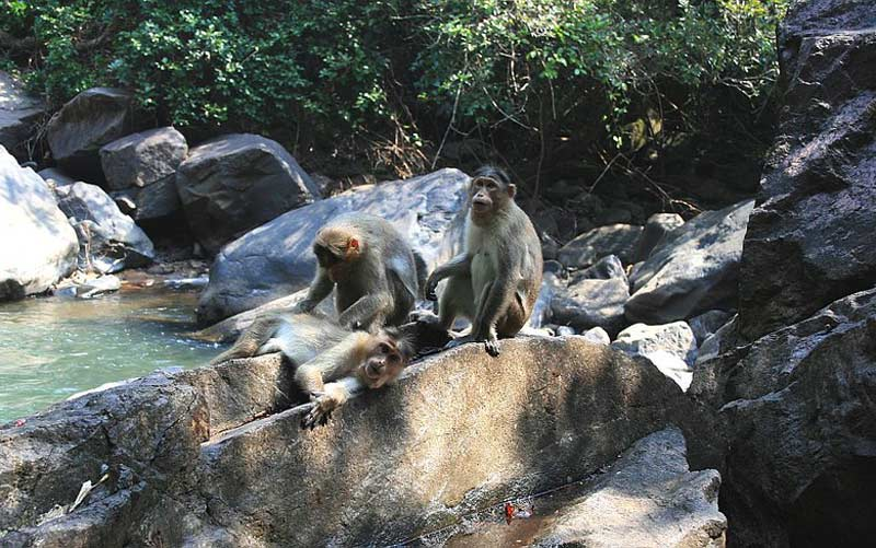 Guide to exploring the uncelebrated colors of Wild Goa and its Wildlife Sanctuaries! 2021
