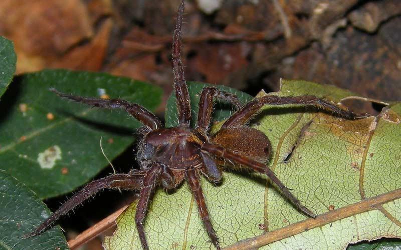 Spider-at-Cotigao
